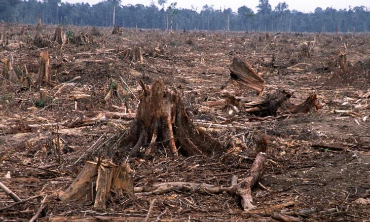 Deforestation Article image