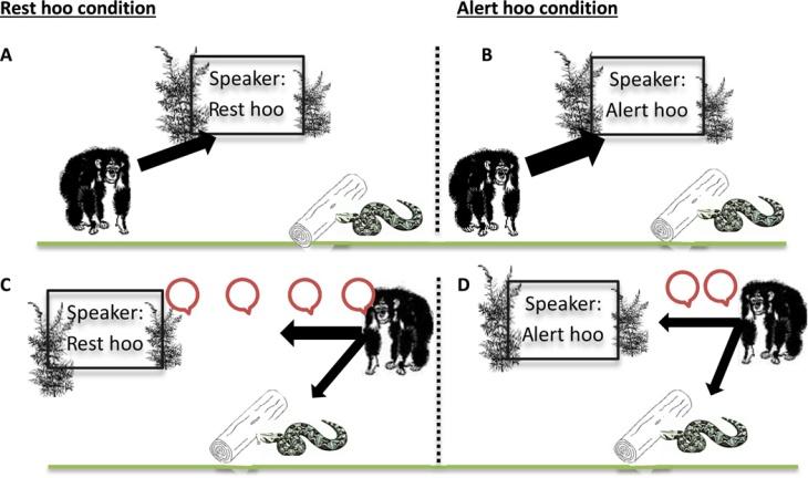 experimental design chimp vocalization